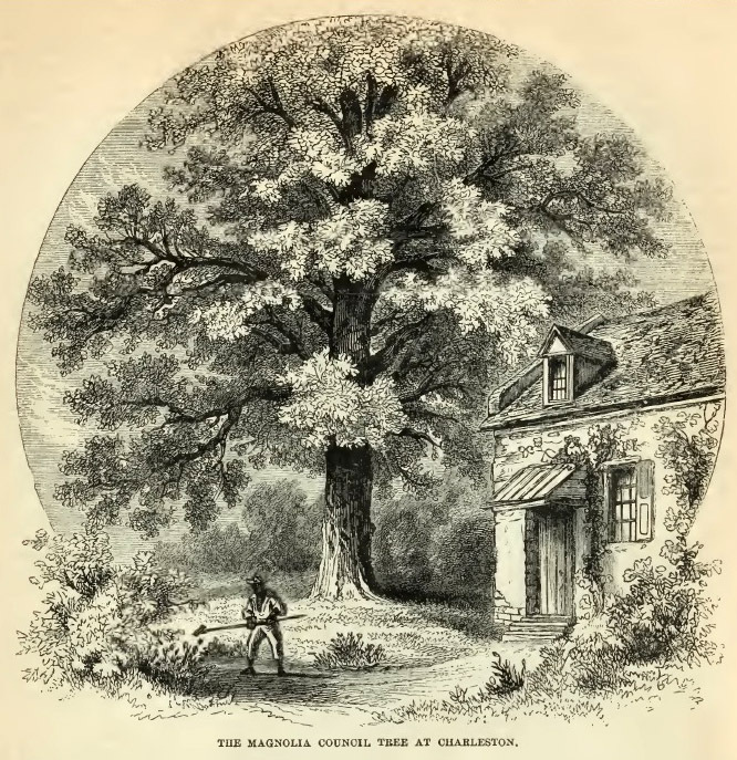 11--Magnolia Council Tree.jpg