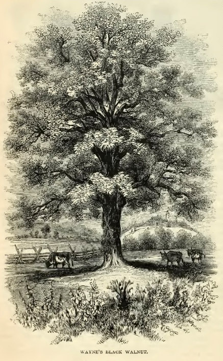 12--Wayne's Black Walnut.jpg