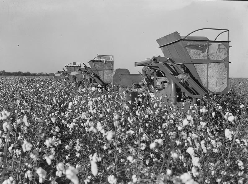 Cotton Harvesters.jpg