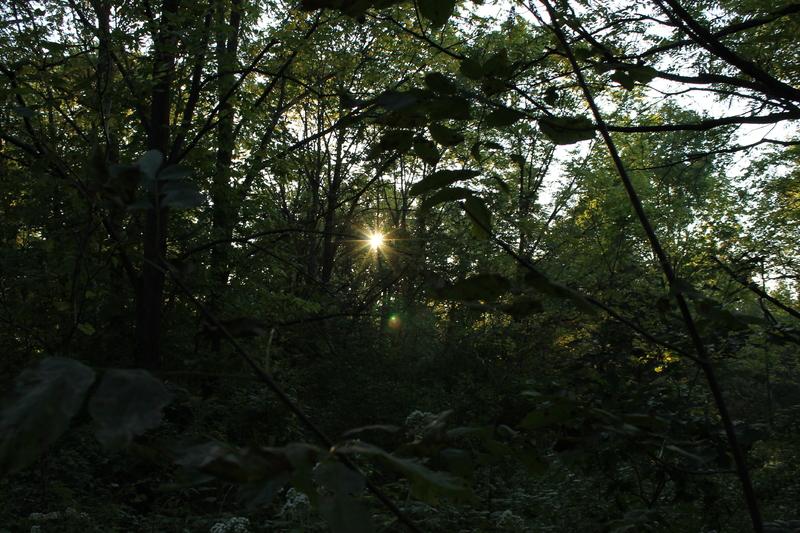 Arboretum forest