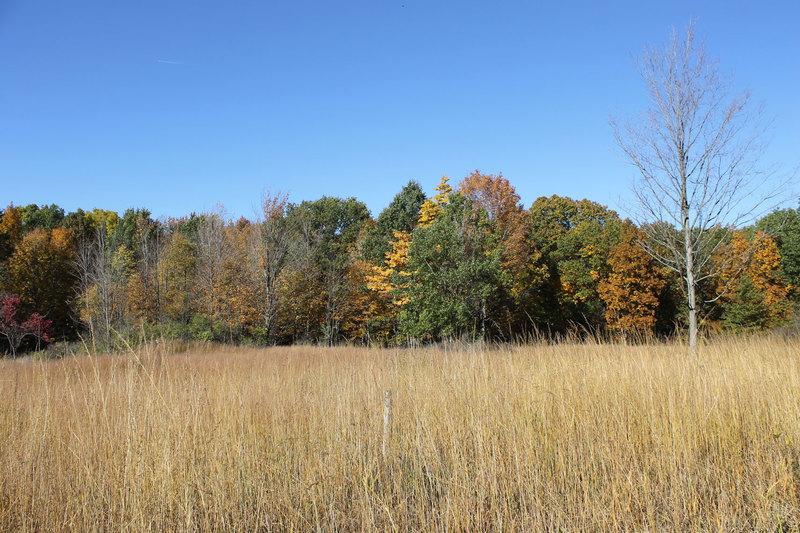 Tallgrass-meadow--small.jpg