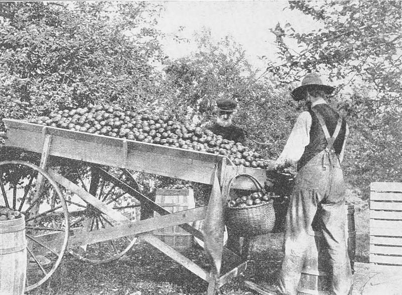 Apple Orchard Survey 288.1.jpg
