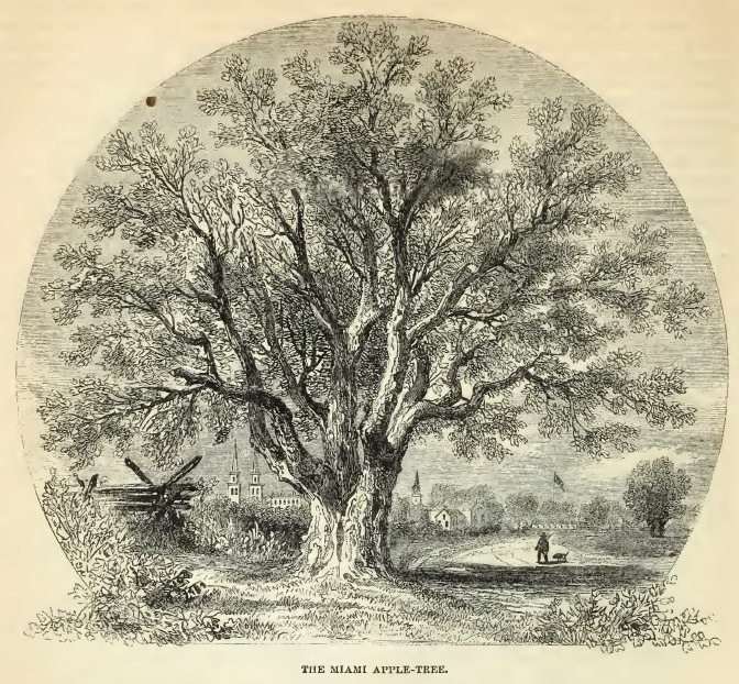 16--Miami Apple Tree.jpg