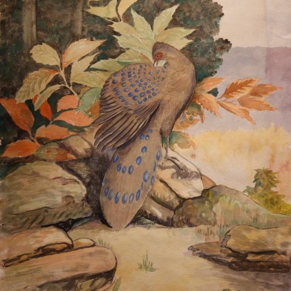 Nakamizo - Peacock Pheasant.JPG