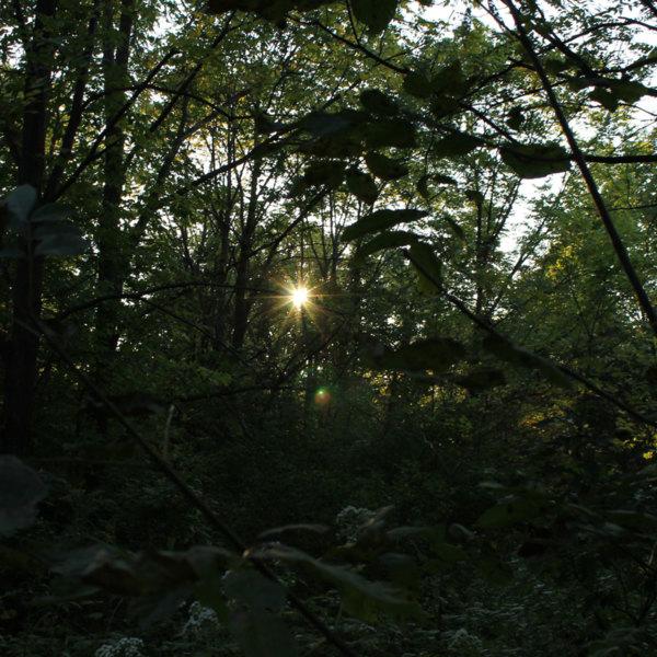 Arboretum-Forest--small.jpg