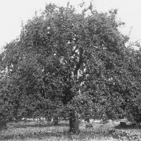 Apple Orchard Survey 006.jpg