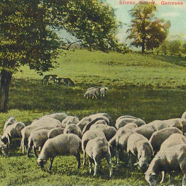 Sheep Scene front.jpg