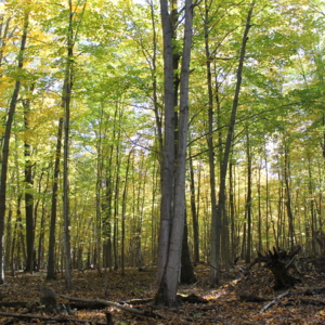 Oak and Hickory Forest