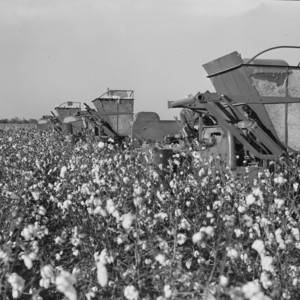 Cotton Harvesters.jpg