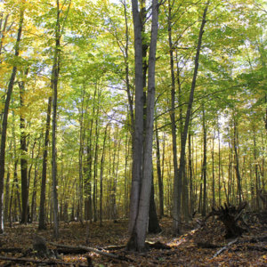 Oak-and-Hickory-Forest--small.jpg