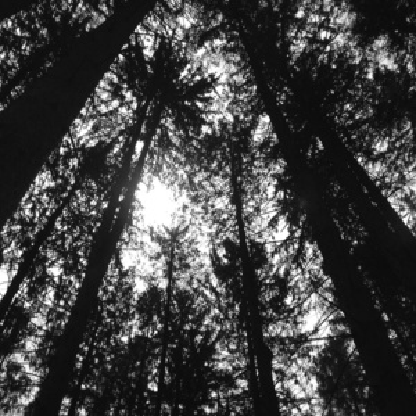 Trees--medium.jpg