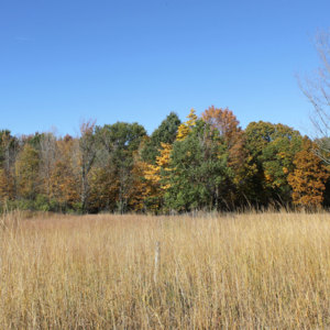 Tallgrass-meadow--small.jpg