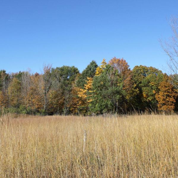 Tallgrass meadow