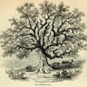 American Historical Trees